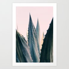 Agave Daydreams Art Print