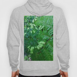 Redwood and fern tree Hoody