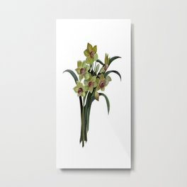 Lent Lily Isolated Metal Print