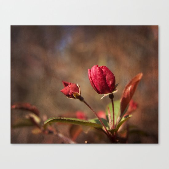 Early Spring Canvas Print