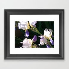Irises Framed Art Print