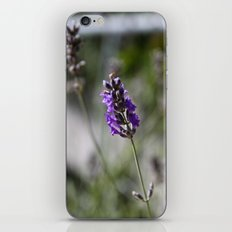 lavendar iPhone & iPod Skin