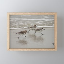 Sandpipers Framed Mini Art Print