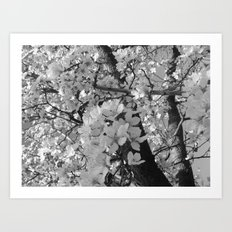 Places in Black & White: Plum Tree 8 Art Print