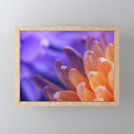Flower Sunset | cute pastel flower, peach flowers, orange floral pattern, pretty petals, macro Framed Mini Art Print
