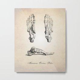 Human Anatomy Feet Art Print Metal Print