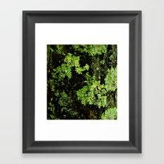 Textures - Moss Framed Art Print
