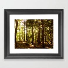 Woodland Serenity Framed Art Print