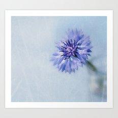 Cornflower Dreams Art Print
