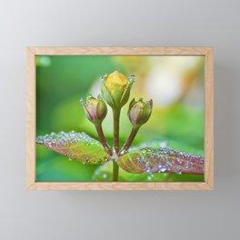 Refreshing nature Framed Mini Art Print