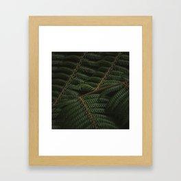 Fern 3 Framed Art Print