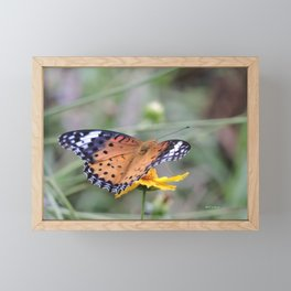 Indian Fritillary in Hangzhou Framed Mini Art Print