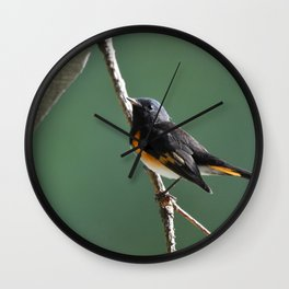 A Male American Redstart Wall Clock