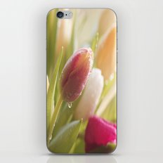 Bouquet of tulips spring flowers in pastel iPhone & iPod Skin