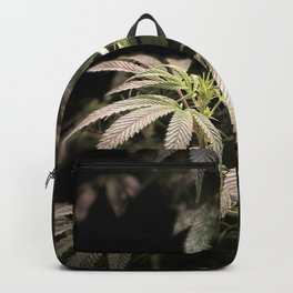 Shining in Black Backpack