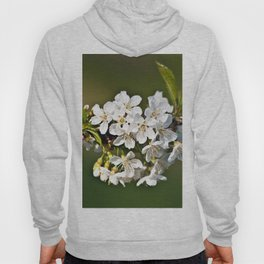 White Apple Blossoms Hoody