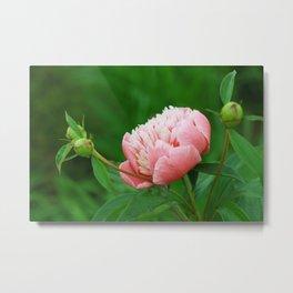 Cute Pink Summer Flower Metal Print