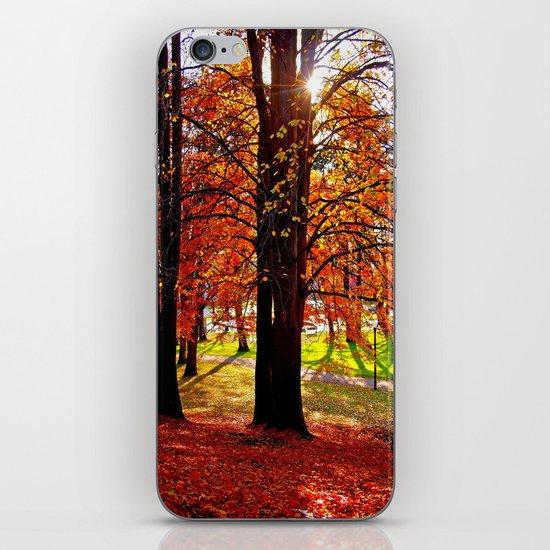 Autumn sunshine iPhone & iPod Skin