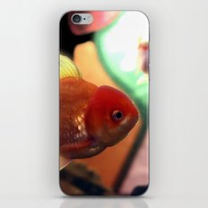 freshwater Gold fish iPhone & iPod Skin