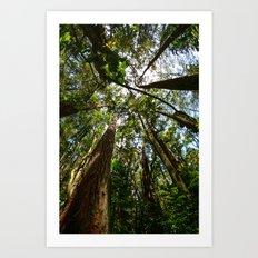 Hawaii Woods Art Print