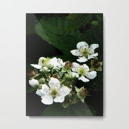 Fraises des bois Flowers Metal Print