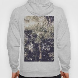 Dappled Light Filtered Through Trees Hoody