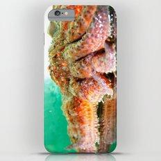 Sunflower Sea Star iPhone 6s Plus Slim Case
