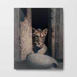 Lion portrait - Art print baby lion cat Metal Print