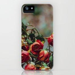 Windowsill Roses no. 1 iPhone Case