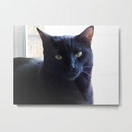 Cranky cat Metal Print