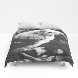 Little Blue Jay Fledgling Black and White Photography Comforters