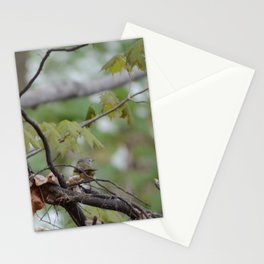 Song Bird's Mate pic 1 Stationery Cards