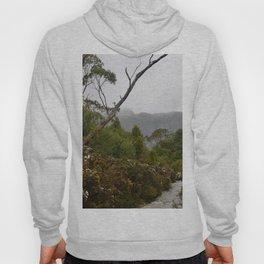 Eucalypt forest Hoody