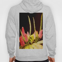 Exotic Colorful Flowers On A Black Background #decor #society6 Hoody