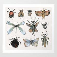 Entomology Art Print
