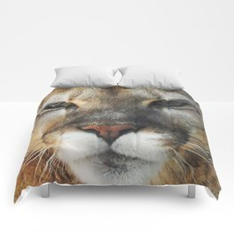 Beautiful Abby Comforters