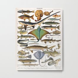 Adolphe Millot - Poissons A - French vintage nautical poster Metal Print
