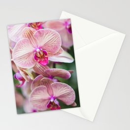 Touch of Pink - Orchid Photography Stationery Cards