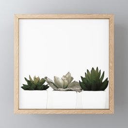 Lovely green cactus - cacti in white pots on a white background Framed Mini Art Print