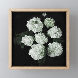 White lilac 5 Framed Mini Art Print