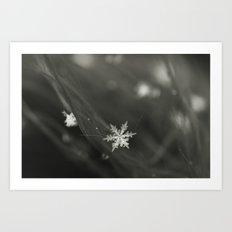 Cold morning Art Print
