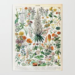Adolphe Millot - Fleurs B - French vintage poster Poster
