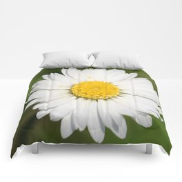 Closeup of a Beautiful Yellow and Wild White Daisy flower Comforters