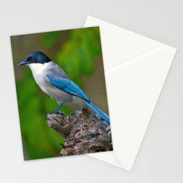 Azure-winged Magpie Stationery Cards