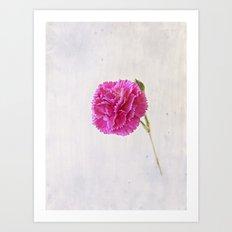 Carnation on paper Art Print
