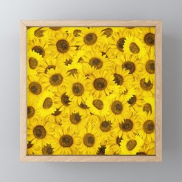 Lots of sunflowers Framed Mini Art Print