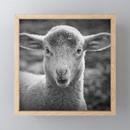 Lamb's portrait Framed Mini Art Print