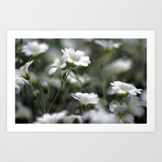 Snow In Summer Art Print