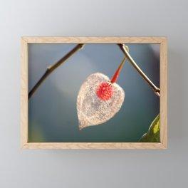 Japanese Lantern Flower Fruit Close up Framed Mini Art Print