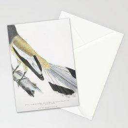 2500 Weigler Rufons Magpie Pica Vagabunga Natives of Calcutta26 Stationery Cards